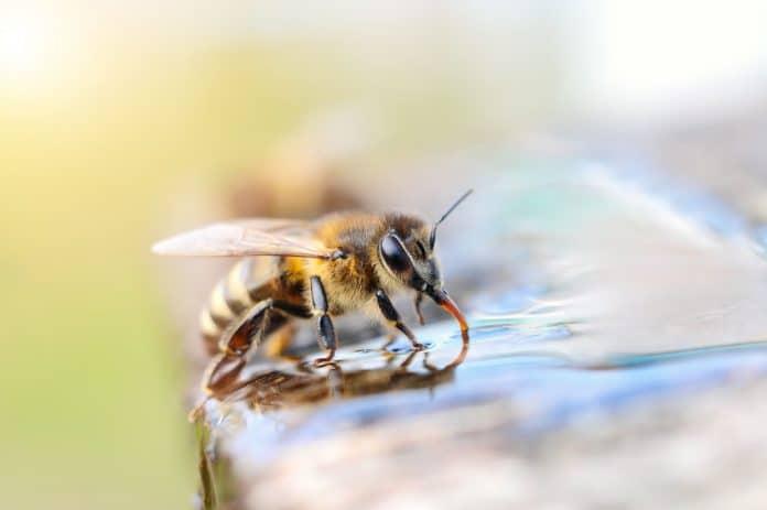 Biologie de l'abeille
